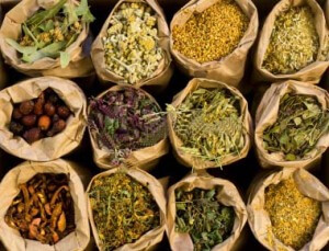 how to become a certified herbalist